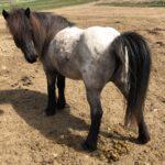 Entwurmung beim Pferd – Teil 1: Strategisch oder Selektiv?